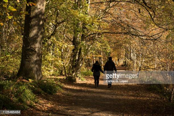 a couple walks holding hands under a tree canopy in the picturesque lady mary's walk along the river earn in crieff, highlands of scotland, uk, surrounded by autumn colours - crieff stock pictures, royalty-free photos & images