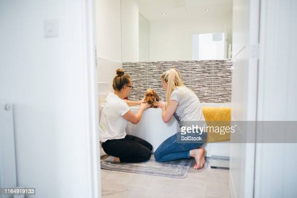 couple washing puppy together - couples showering stock pictures, royalty-free photos & images
