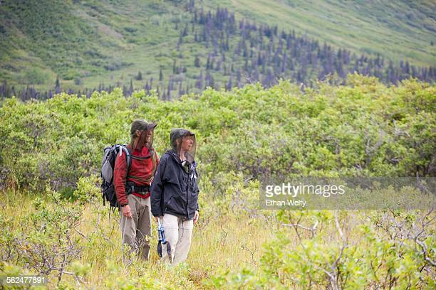 a couple, wearing mosquito headnets, hike in donoho basin in wrangell-st. elias national park, alaska. - mosquito net stock photos and pictures
