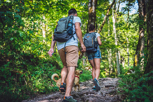 Couple with a dog hiking in forest 851867678