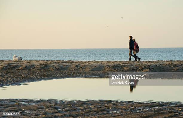 couple with dog on beach reflected in water - lyn holly coorg stock pictures, royalty-free photos & images