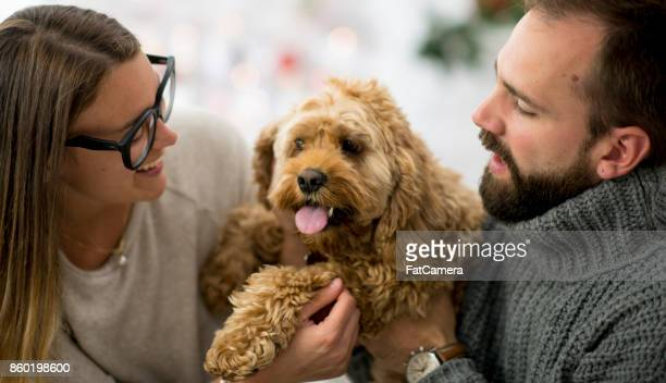 couple with dog - labradoodle stock photos and pictures