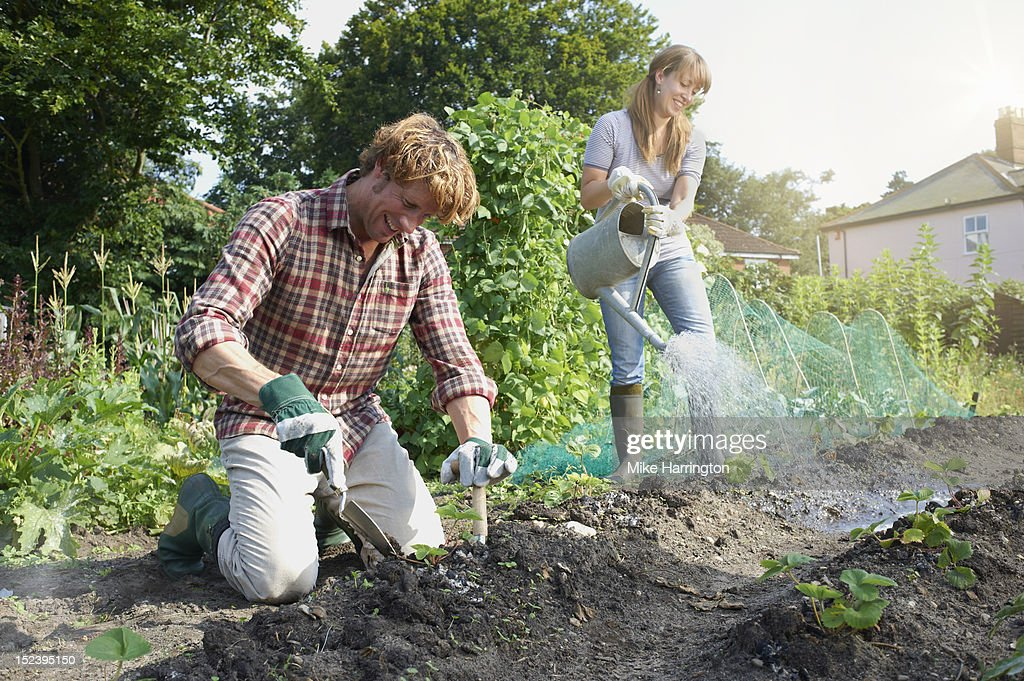Couple working in allotment : Bildbanksbilder
