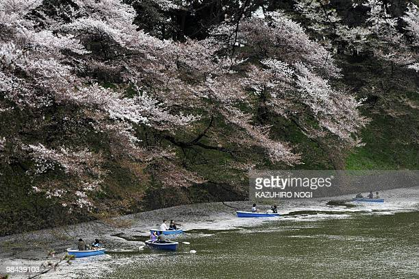 Couples row their boats on a moat to admire the last stages of the fullbloom cherry blossoms in Tokyo on April 11 2010 Japanese people all over the...