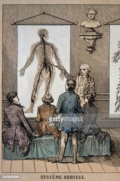Cours sur le système nerveux du corps humain au XIXè siècle.