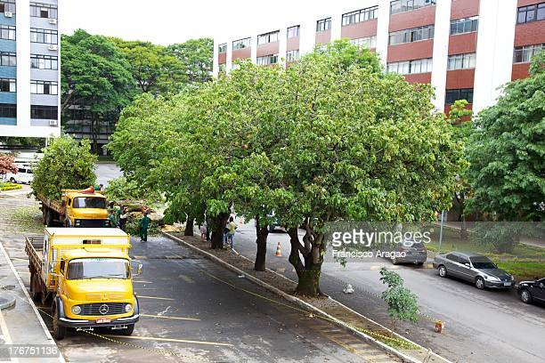 CONTENT] Court of urban trees in the Pilot Plan of Brasilia