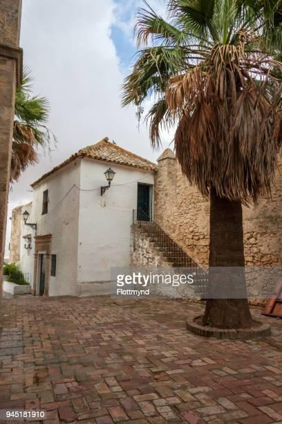 Courtyard with Palm tree in Vejer de la Frontera, Spain