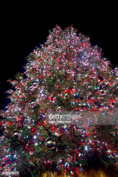 Covent Garden Christmas tree.