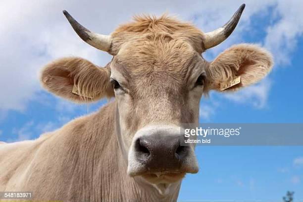 cow 2010