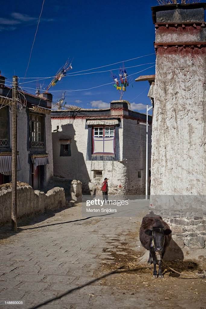 Cow and person in street in old town. : Stockfoto