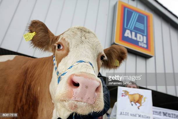 Cow Anja and some farmers protest in front of an Aldi supermarket on April 22 2008 in Fuerstenfeldbruck near Munich Germany While German dairy board...
