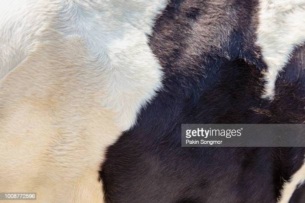 cow background - cowhide stock photos and pictures