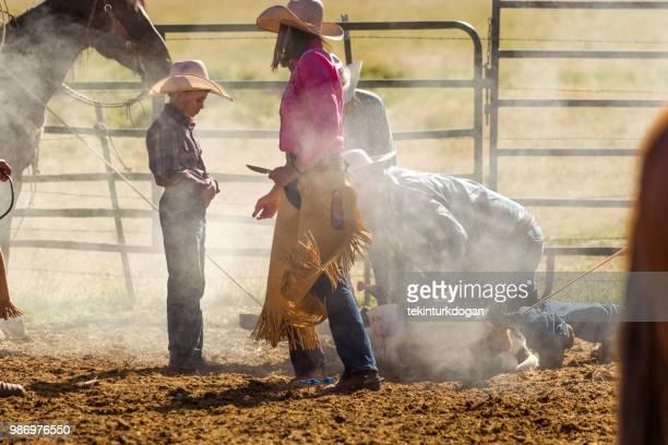 Cow cattle veal herding roping at santaquin valley of Salt lake City SLC Utah USA