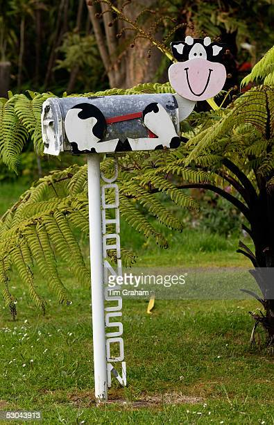 Cow design mailbox North Island New Zealand