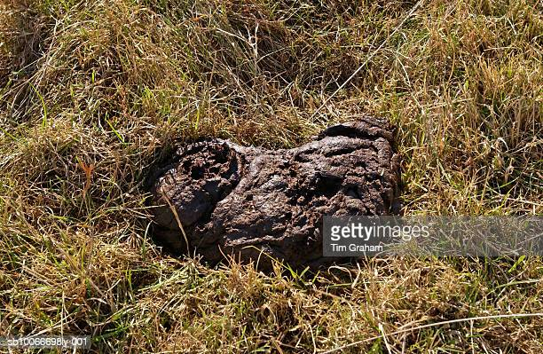 Cow Dung, Cotswolds, UK
