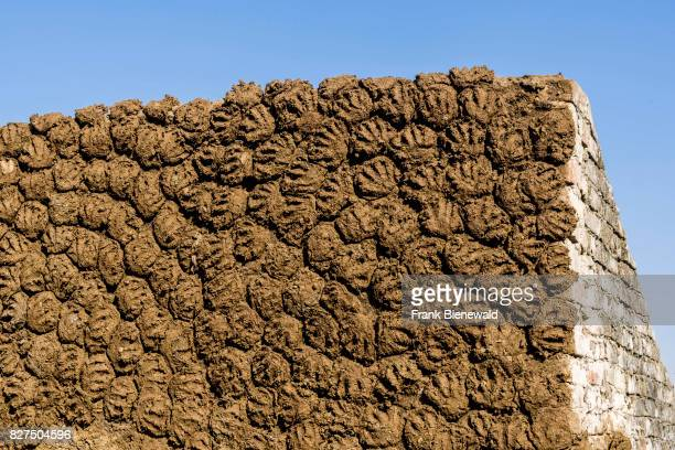 Cow Dung Stock Photos and Pictures | Getty Images