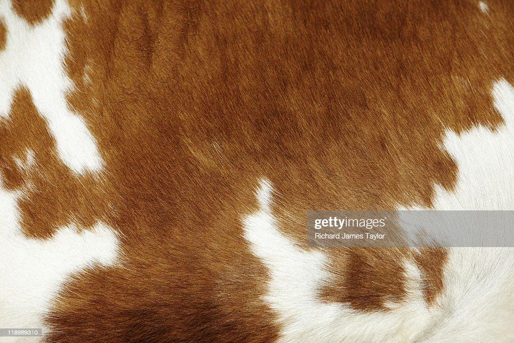 Cow hide : Stock-Foto