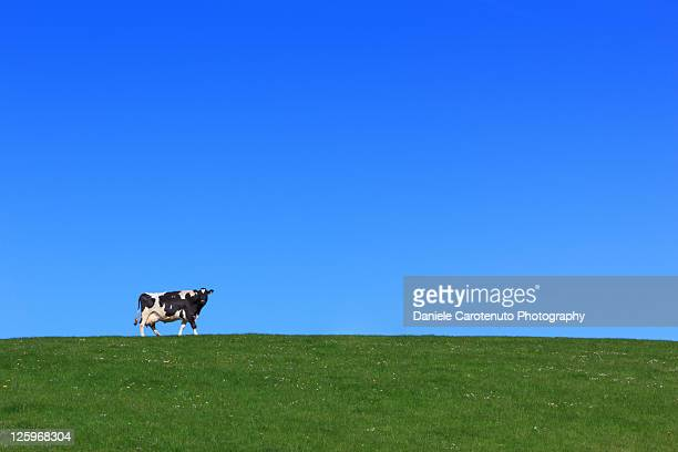 Cow in green grass field