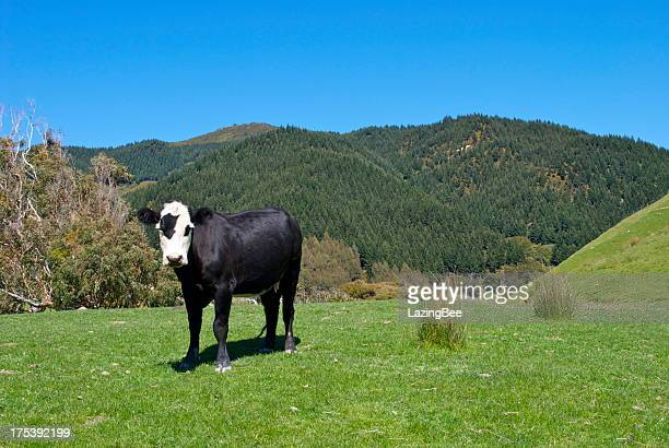 Cow in Rural Scene