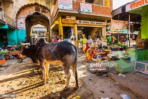 cow in the bazaar (market) - bazaar stockfoto's en -beelden