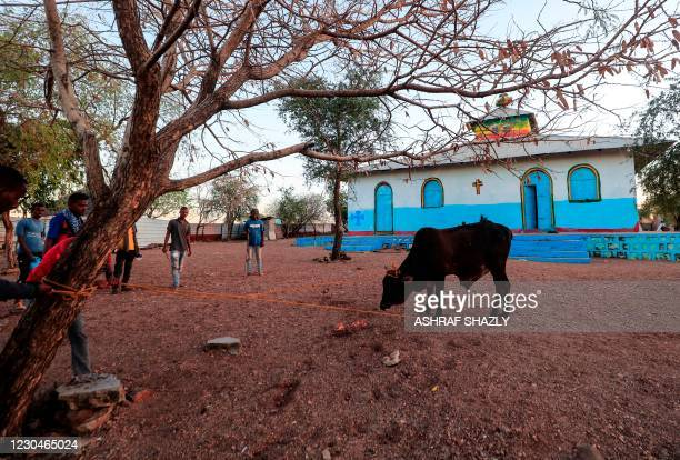 Cow is tied to a tree in front of an Ethiopian Orthodox church built by former Ethiopian refugees, at a village next to Um Raquba refugee camp in...