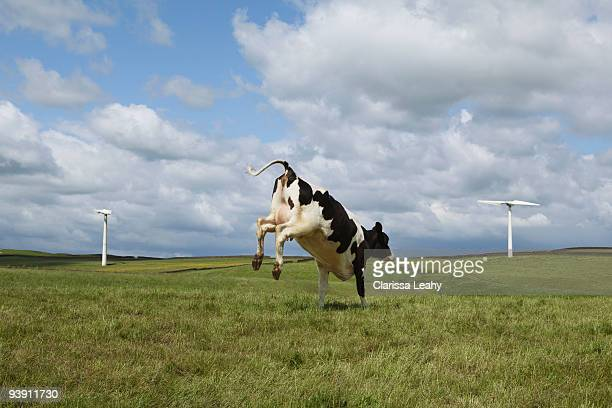 Cow jumping in field