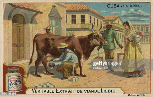 Cow milking Cuba 19th century Collecting of milk in buckets From a recipe card for Liebig 's Extract of Meat