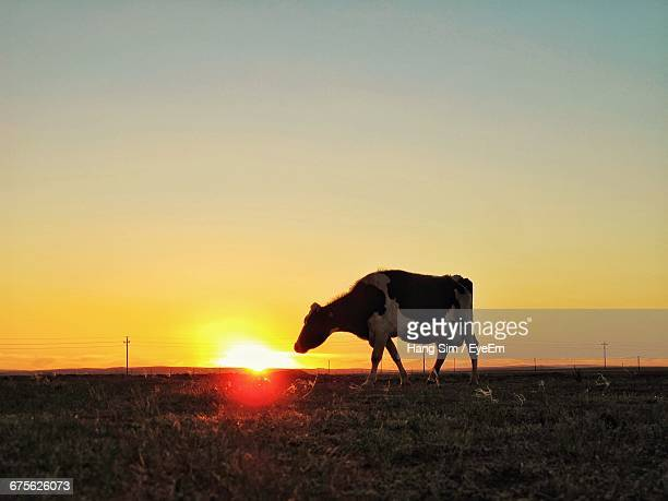 Cow On Field Against Orange Sky During Sunset