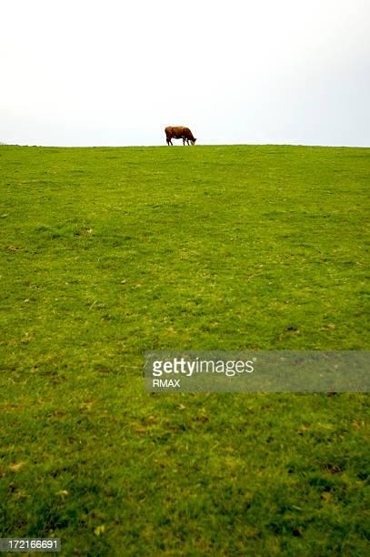 Cow on the horizon
