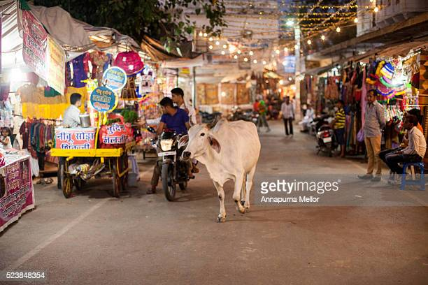 A cow on the streets at Diwali in Pushkar, India