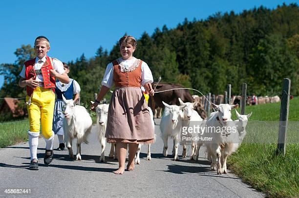 cow-parade - almabtrieb stock-fotos und bilder