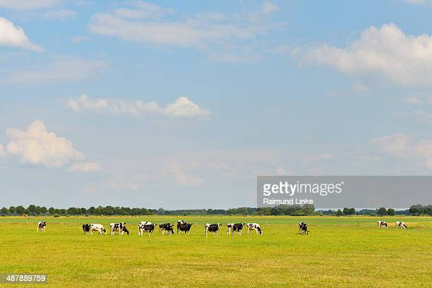 Cow Pasture in Summer
