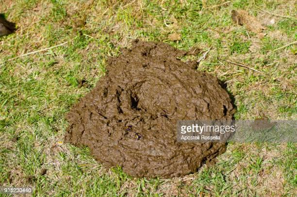cow poop in the mountains - excremento fotografías e imágenes de stock