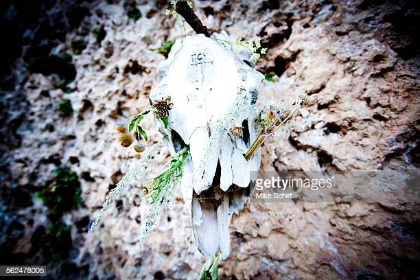 A cow scull with flowers and directions to climing locations, Ten Sleep, Wyoming.