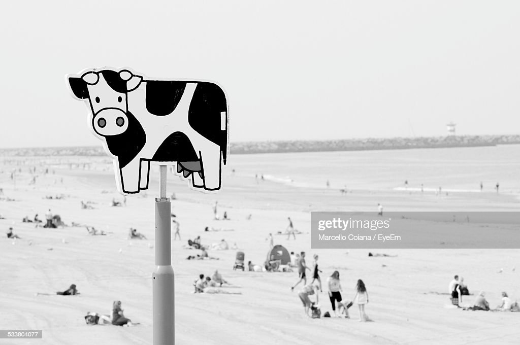 Cow Sign On Beach : Foto stock