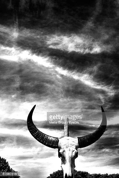 Cow Skull On Wooden Pole Against Cloudy Sky