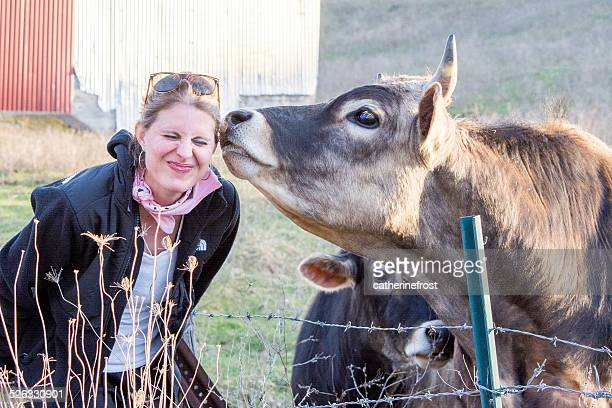 Cow smelling woman's face