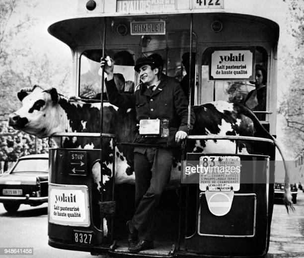 A cow stands in a bus in the streets of Paris in the 60s