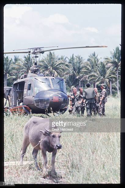 A cow stands in front of a helicopter during the filming of 'Apocalypse Now' April 28 1976 in the Philippines The movie directed by Francis Ford...