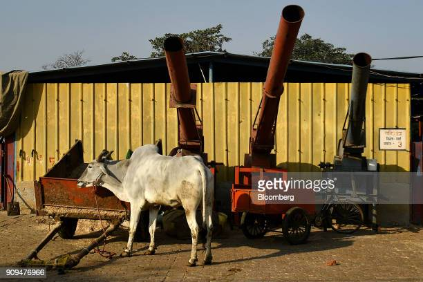 A cow stands next to fodder machinery at the Sri Krishna Gaushala on the outskirts of New Delhi India on Sunday Jan 21 2018 The nursing home offers...