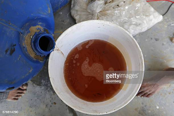 Cow urine is poured into a bucket at a processing facility in Greater Noida Uttar Pradesh India on Friday June 17 2016 Urine from India's indigenous...