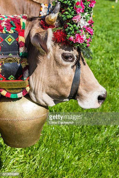 Cow with bell and flowers crown