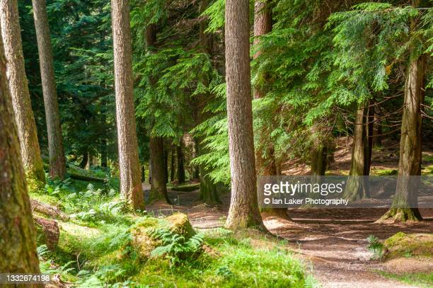 cowal, argyll and bute, scotland, uk. 13 july 2021. view of woodland surrounding puck's glen. - national wildlife reserve stock pictures, royalty-free photos & images