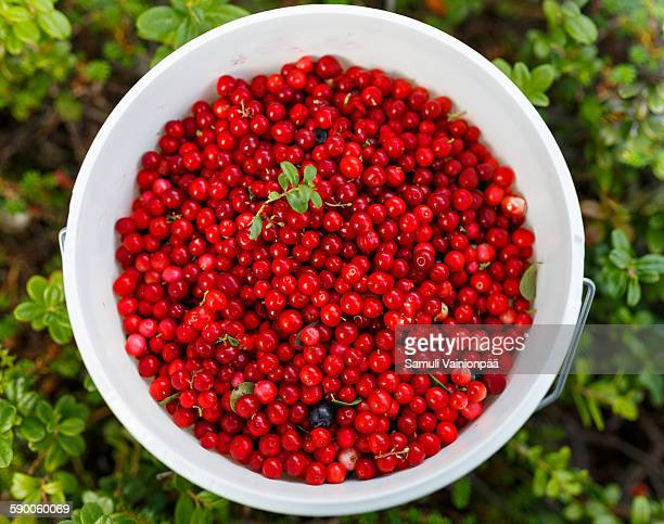 Cowberries