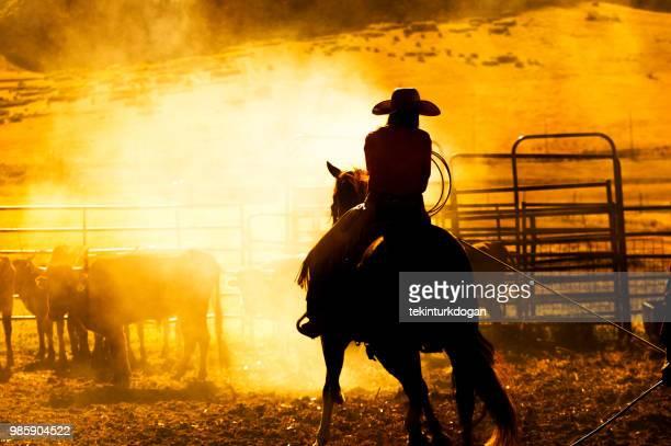 vaqueiro na fazenda de gado no vale de santaquin durante o pôr do sol perto de salt lake city slc utah eua - gado - fotografias e filmes do acervo