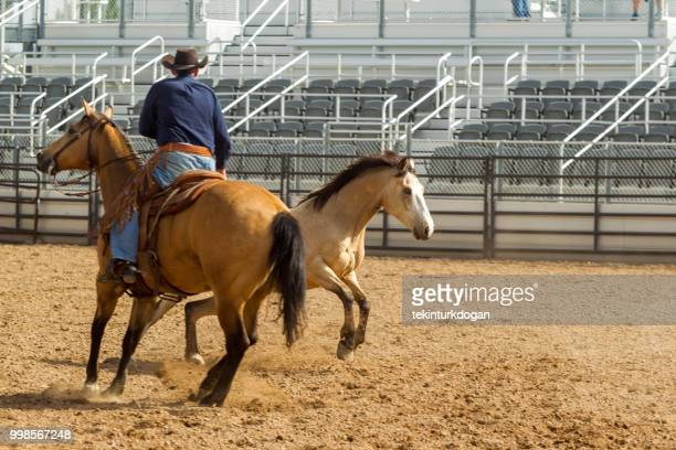 cowboy at wild horse riding competition