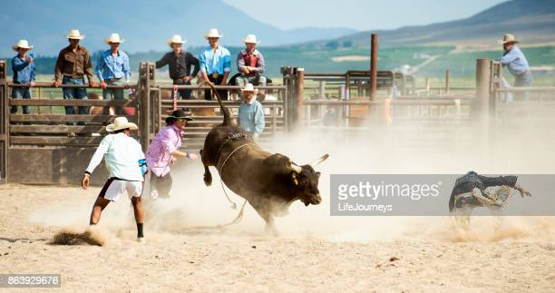 Cowboy Being Thrown By A Big Bull At The Rodeo