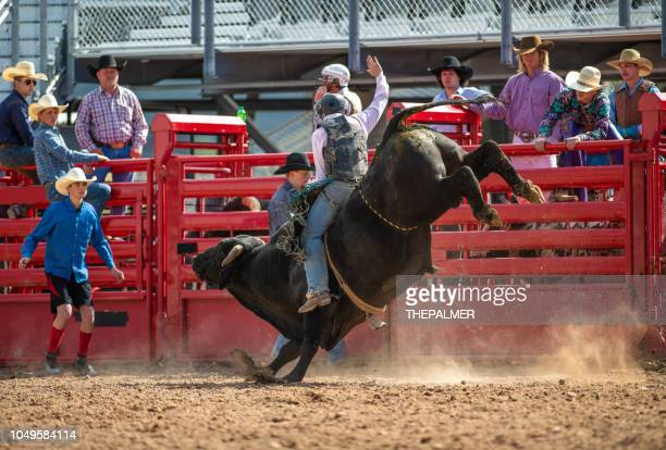 cowboy bull riding in rodeo arena - bull riding stock pictures, royalty-free photos & images
