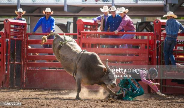 Cowboy Bull Riding in Rodeo Arena