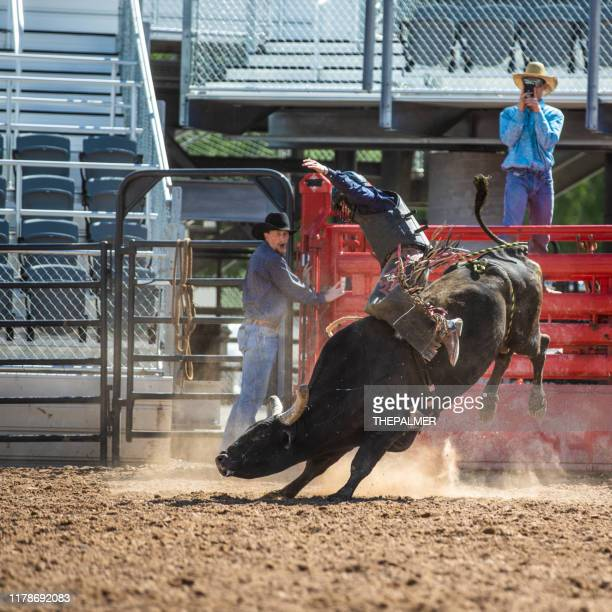 cowboy bull riding in rodeo arena - spanish fork utah stock pictures, royalty-free photos & images